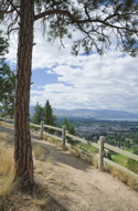 Image: gentle mountain hiking trail with Ponderosa pine tree.